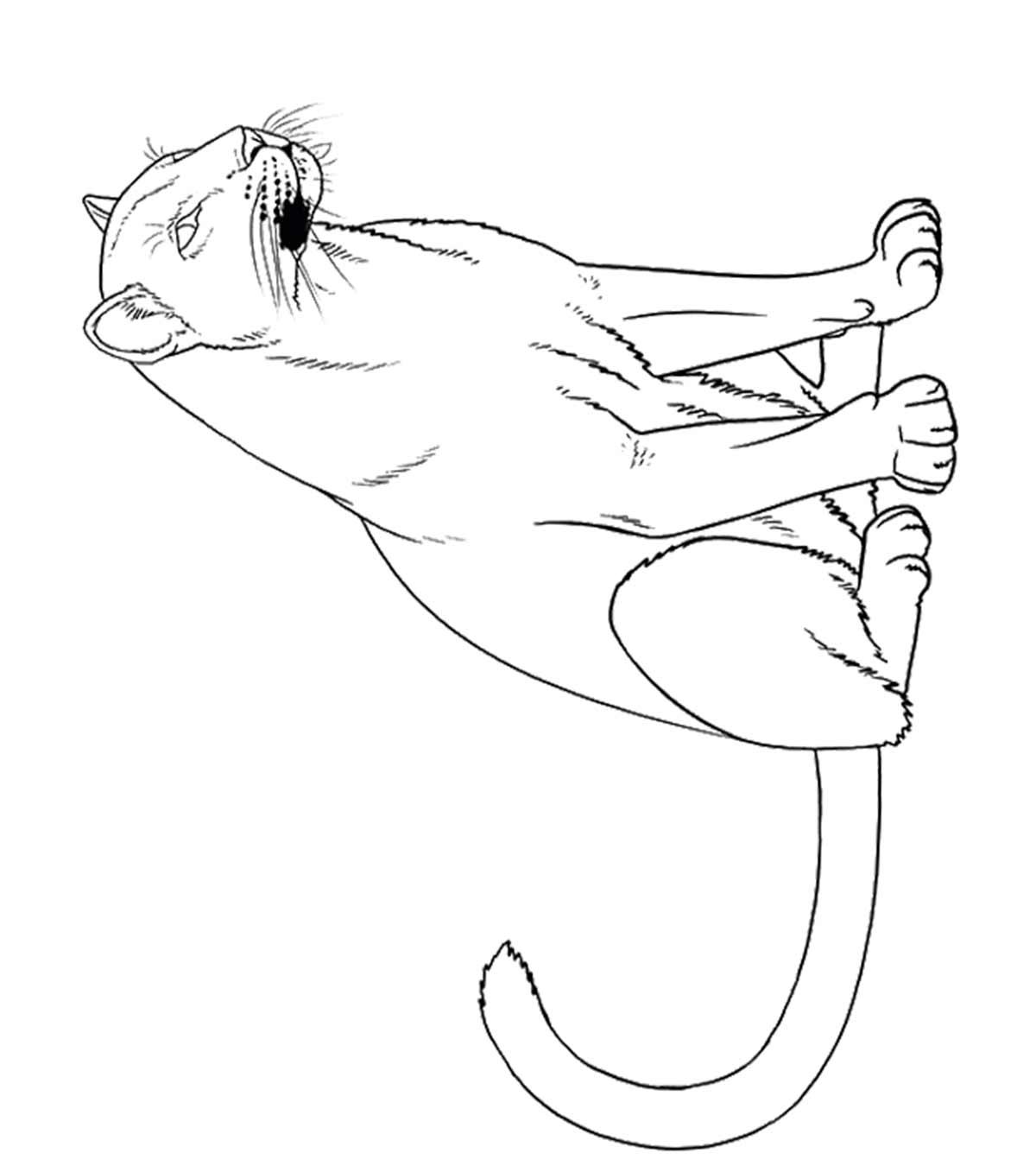 Free Orangutan Coloring Pages, Download Free Clip Art, Free Clip ... | 1350x1200