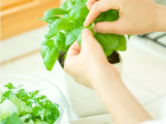 Is It Safe To Consume Tulsi (Holy Basil) During Pregnancy?