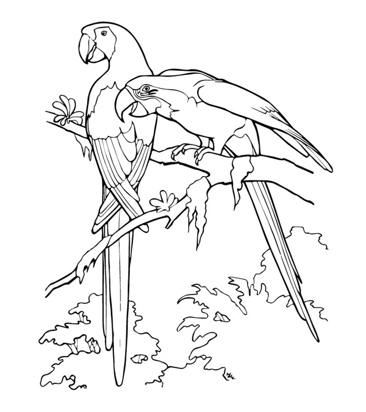 Feather Coloring Pages For Adults | 1350x1200