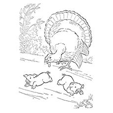 Bronze Turkey Printable to Color