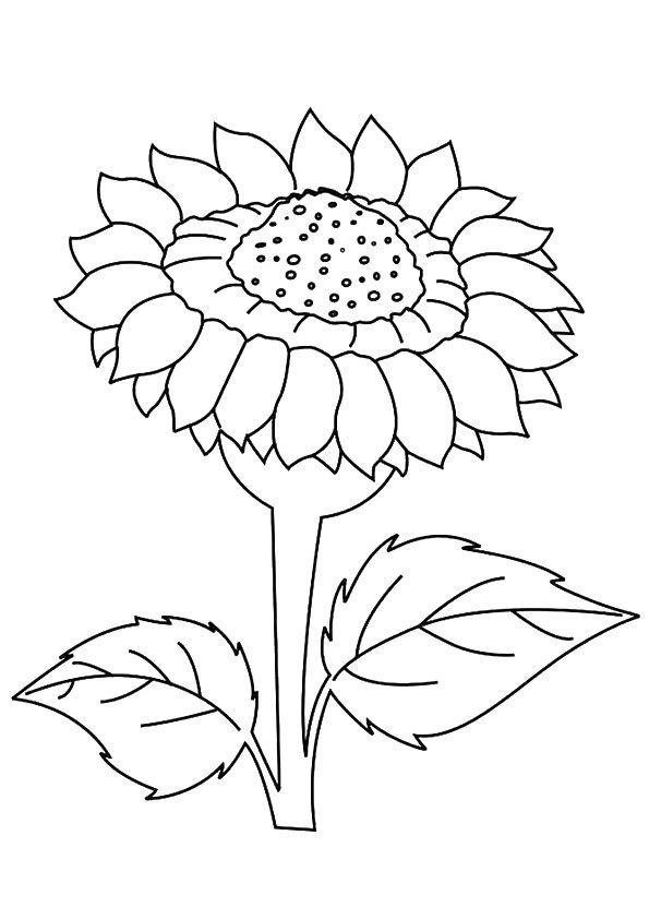 Dafna-Sunflower