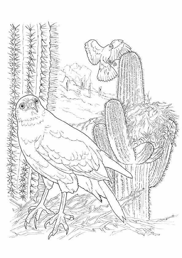 Harris-Hawk-And-Cactus