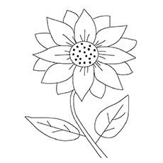 Maximilian-Sunflower