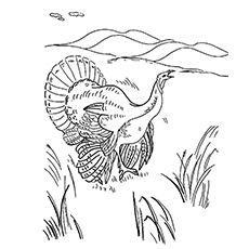 Coloring Sheet of Ocellated Turkey Free