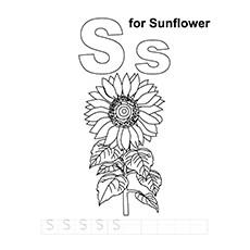 S-For-Sunflower