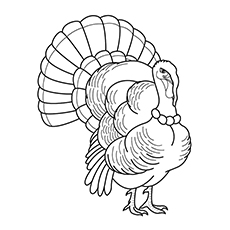 Coloring Pic of The Royal Palm Turkey