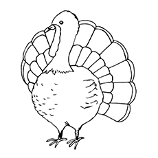 Coloring Pages of The Turkey Bird