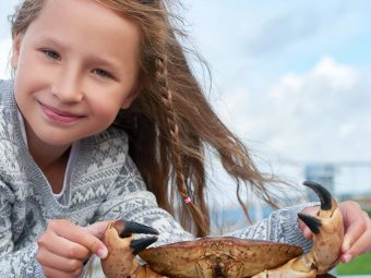 24 Fun Facts And Information About Crab For Kids