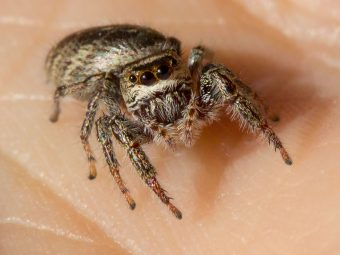 Spider Bite When Pregnant: Symptoms, Safety, And Treatment