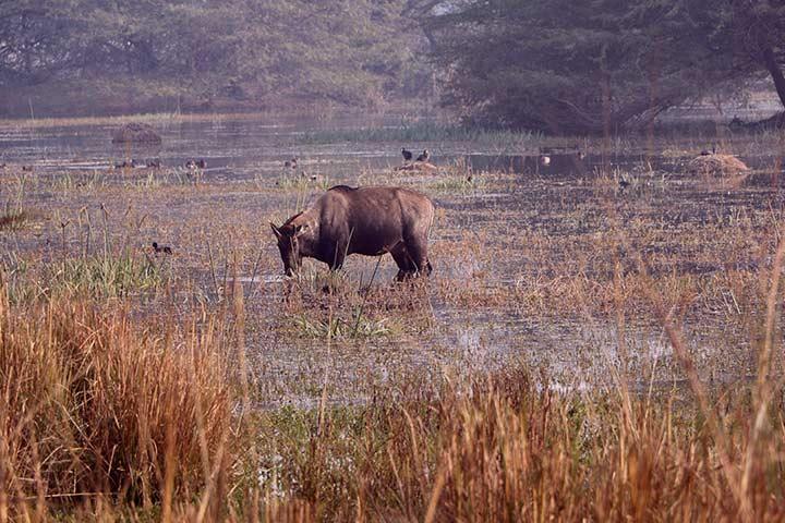 Sultanpur National Park Bird Sanctuary Gurgaon Timings