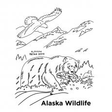 Alaskan-Wildlife-17