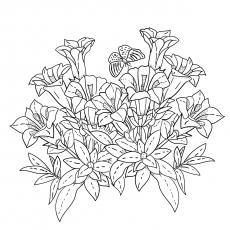 American-Wildflowers-17
