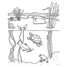 Freshwater-Habitat