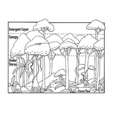 Layers-Of-Rainforest