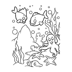 The-Magnificent-Ocean-Life