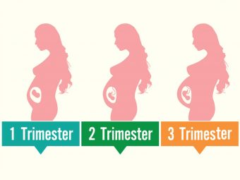 Uterus During Pregnancy: Its Size, Changes And Role