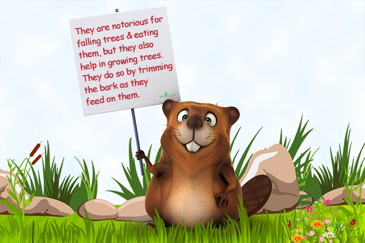 Beaver Facts For Kids