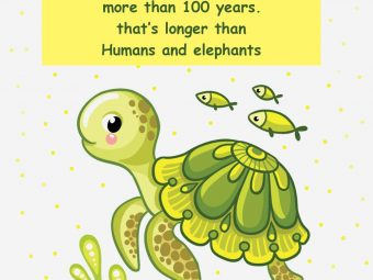 25 Fun Facts About Sea Turtle For Kids