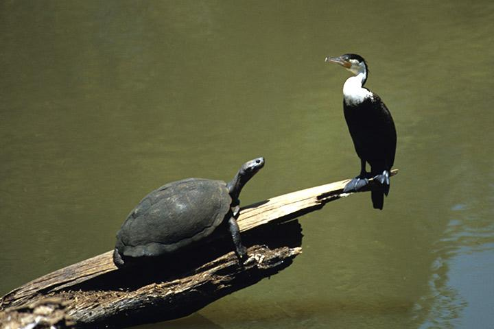 Turtle and birds