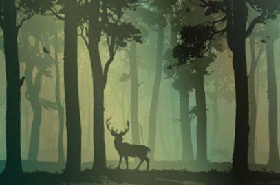 जातक कथा: रुरु मृग   The Story of Ruru Deer in hindi