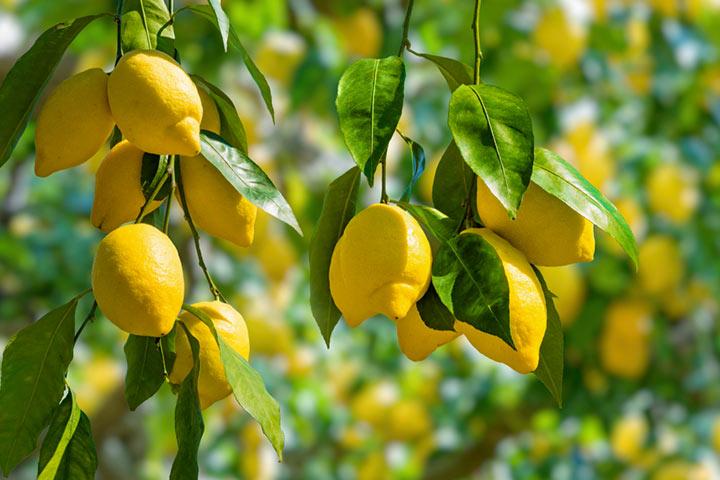 Is Lemon Good For Pregnancy?