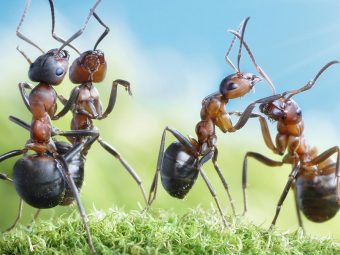 30 Interesting Information And Facts About Ants For Kids
