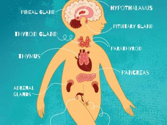 What Is Endocrine System? Parts And Functions Explained For Kids