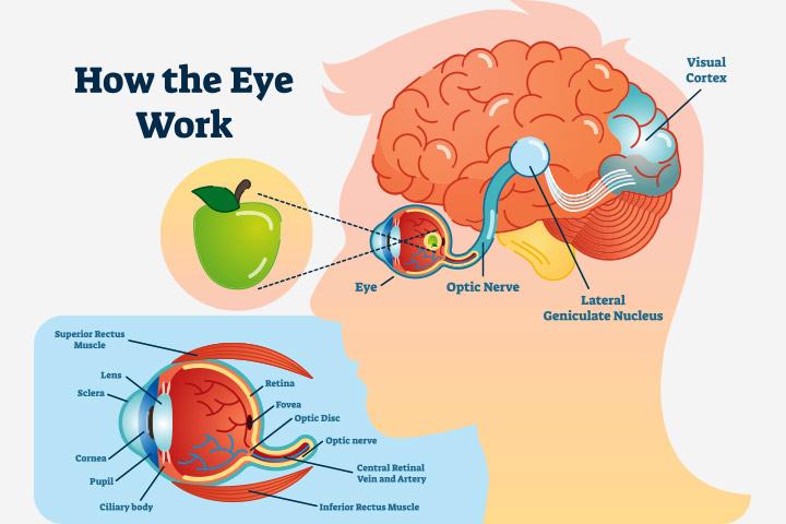How to work brain