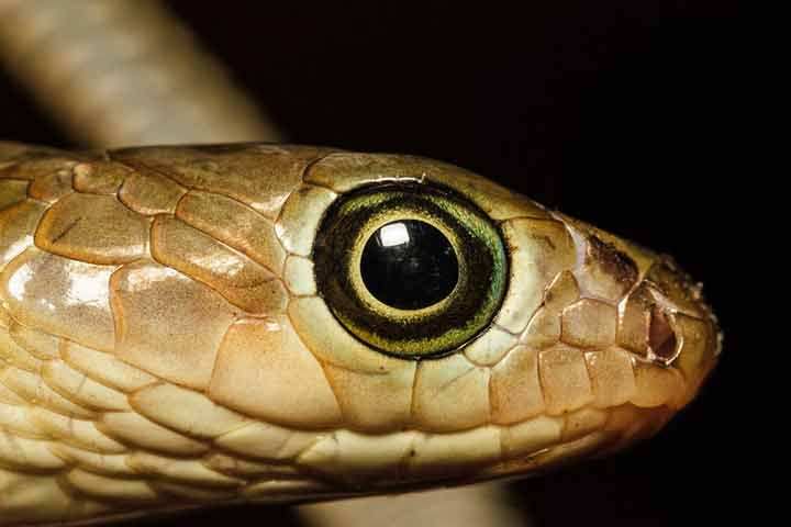 Are Snakes Blind And Deaf