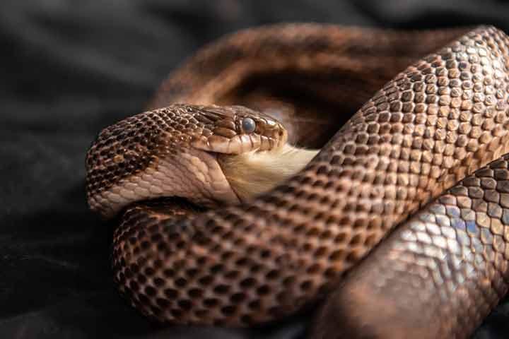 How Do Snakes Feed