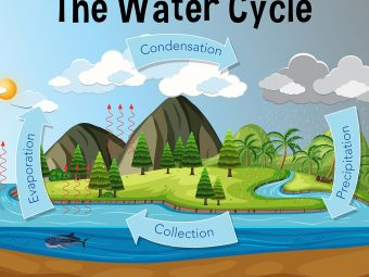 Water Cycle For Kids: Diagram, Information, Facts, And Activities