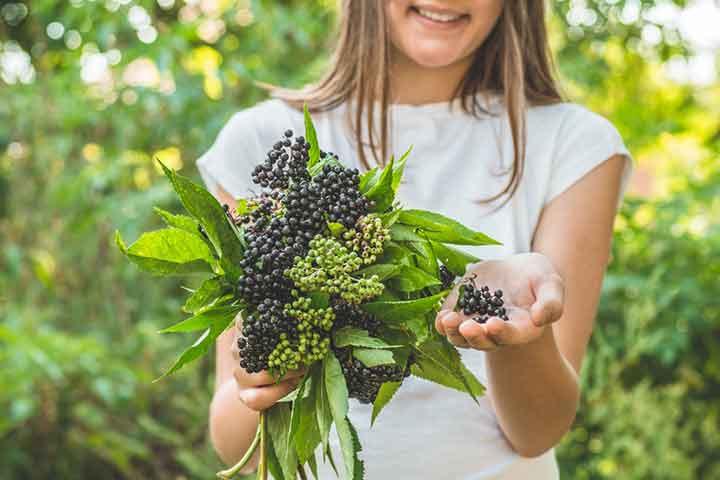 Elderberry For Kids