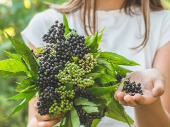 Elderberry For Kids: Is It Safe, Benefits, Side Effects And Precautions