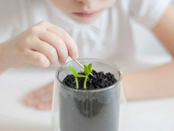 Parts Of A Plant: Diagram, Functions And Fun Facts For Kids