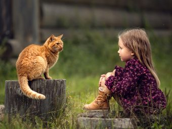 100+ Interesting Information And Facts About Cats For Kids